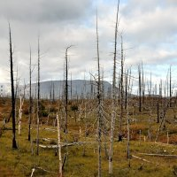 Мертвый лес :: Витас Бенета