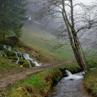 лесной ручей :: Elena Wymann