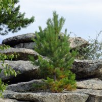 и на камнях растут деревья :: Марат Номад