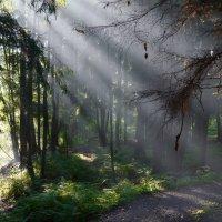 На лесной тропинке... :: Юрий Цыплятников