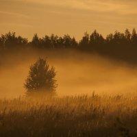 Утренний туман 1 :: Николай Алексеев