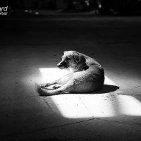 Преданность и одиночество .. :: Виталий Удодов