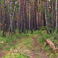 Поездка по лесу :: Дмитрий Конев