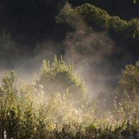 туман собачку сотворил! :: svetlana