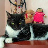 Ну очень суровая кошка! :: Игорь Хижняк