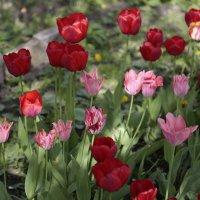 Цветочный хоровод-497. :: Руслан Грицунь