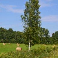 Во поле берёзка.. :: zoja