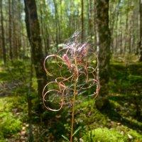 """лесной """"серпантин"""" :: Елена"""