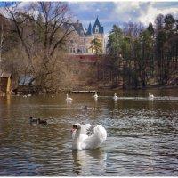Барвиха. Лебединое озеро :: Ирина Абрамова