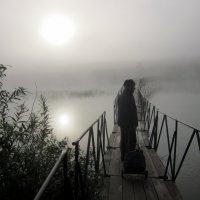 Средь тумана появился ....дачный абориген . :: Мила Бовкун