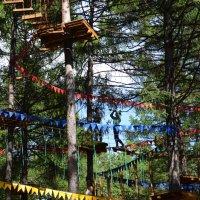 Веревочный парк :: Наталья Тагирова