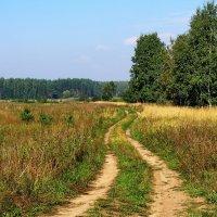 Пожухли травы перелесков... :: Лесо-Вед (Баранов)