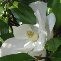 белый цветок :: diamant Татьяна Головина