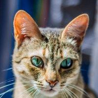 Кошка, которая гуляет сама по себе :: Ekaterina Ktitorova