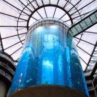 самый большой цилиндрический аквариум в мире AquaDom. :: Olga