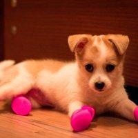 И кто придумал эту обувь?! :: Valentina Zaytseva