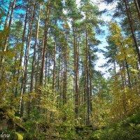 в лесу :: Екатерина Яковлева