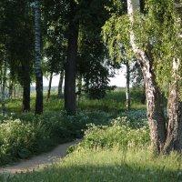 летом :: mirtine