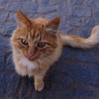бездомный кот!! :: Ольга Cоломатина