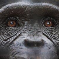 Взгляд... поглубже иного человеческого :: M Marikfoto