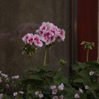 Цветочный хоровод-506. :: Руслан Грицунь