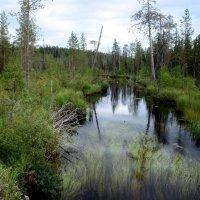 Безымянная болотная речушка :: Александр Шихин
