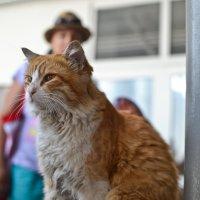 Кот-экскурсант. :: cfysx