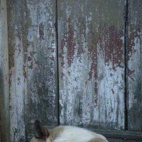 Собачья жизнь :: Iri_S (Ирина Саянова)