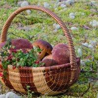 По грибы, по ягоды :: -somov -