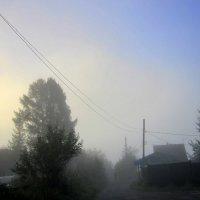 Густой туман , расстояние до человека  20 метров. :: Мила Бовкун