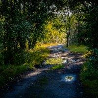 Прогулки по лесу :: Марк Э