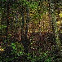 Дремучий лес :: Юра Викулин