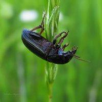 Сон жука. :: Svetlana Baglai