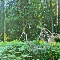 лесные истории :: Елена