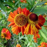 Цветы :: Павел Галактионов
