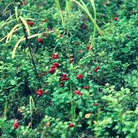Северные дары леса :: Натали V