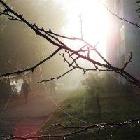 Утро :: Зоя Мишина