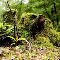 Весь покрытый зеленью.... :: Alexander Andronik