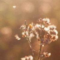 golden morning light :: Игорь Смирнов