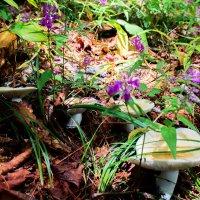 Грузди и цветы. :: Нина Борисова