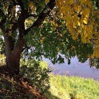 Солнечной грустью желтеющих листьев... :: Лесо-Вед (Баранов)