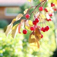 Скоро осень... :: Olga Al