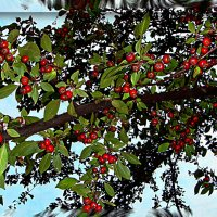 Райские яблочки :: Elena