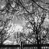 Снежные небеса :: Ирина Сивовол