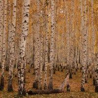 Наш лес :: Елена Belova