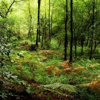 Папоротник в лесу :: Alexander
