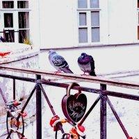 Всё голубки сердечки на замке :: Борис Александрович Яковлев