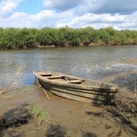 на реке Ница :: Olga