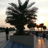 Набережная Абу-Даби :: Мария Стрижкова