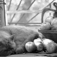 Кот в яблоках :: Илья